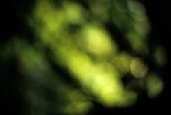 Grüne Unschärfe