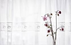 Blumen vor Vorhang