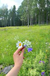Hand with wildflowers of Finland, North Karelia