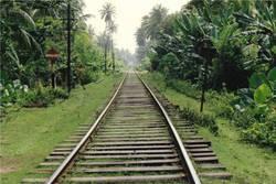 Einbahn durch den Dschungel