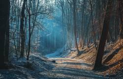 Sonnenstrahlen auf dem Waldweg
