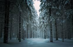 Winterwald in Thüringen