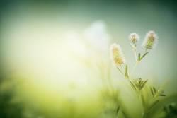 Grüne Wiese im Morgen Nebel