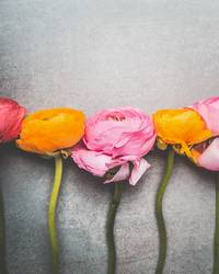 Schöne Blumen auf Grau