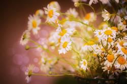 Wilde Kamille Blumenstrauß