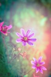 Rosa Blumen im Traumgarten