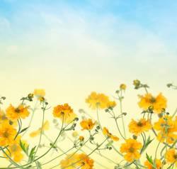Blumen Hintergrund mit gelben Blüten am blauen Himmel