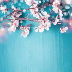 Kirschblüten auf türkis mit Bokeh, Frühling Hintergrund