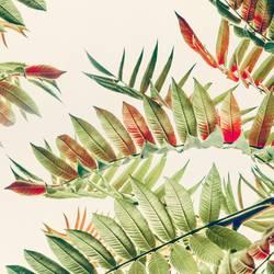 Schöne Herbsblätter