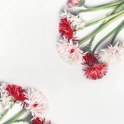 Weißer Hintergrund mit hübschen roten und weißen Blumen
