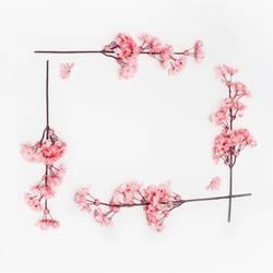 Rosa Frühlingsblüten Rahmen auf weiß
