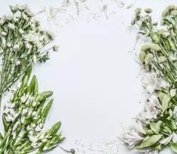 Grün weißen Blumen auf weiße Hintergrund