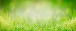 Hintergrund mit grünem Gras