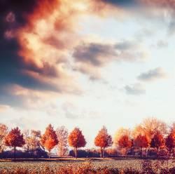 Herbstlandschaft mit Bäumen, Feld und Himmel