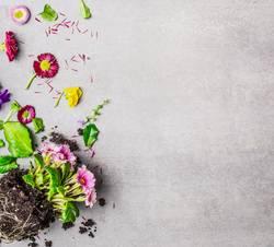 Sommerblumen Pflanzen mit Blüten und Blätter