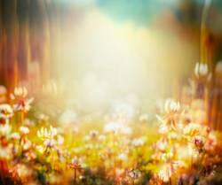 Herbst Hintergrund mit Wiesenblumen
