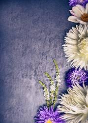 Zusammensetzung weißen Dahlien und lila Astern Blumen