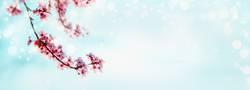 Frühling Nature Hintergrund mit rosa Kirschblüten