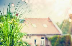 Schöne grüne Pflanze und Blumen auf Dachterrasse