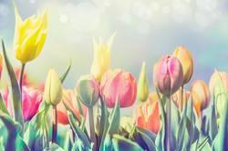 Tulpen Blumen im Park oder Garten