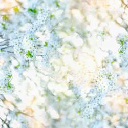 Weißer blühende Hintergrund mit grünen Blättern