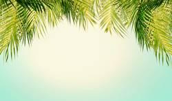 Tropische Palmenblätter mit Himmel Hintergrund