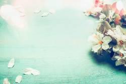 Hübsche Frühlingsblüten auf türkisblauen Hintergrund