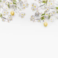 Weiße Frühlingsblüten mit hängenden gelben Ostereiern