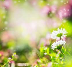 Sommer Hintergrund mit Gänseblümchen