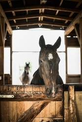 Artgerechte Pferde Haltung im Offenstall