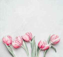 Frühling Hintergrund mit Pastell Tulpen