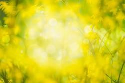 Natur Hintergrund mit gelben Blüten