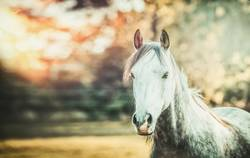 Pferd und Herbst Natur