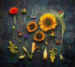 Verschiedene Herbst Pflanzen und Sonnenblumen