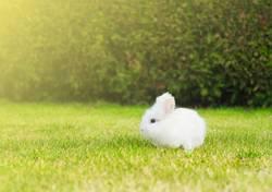 kleines weißes Häschen auf Rasen im Garten