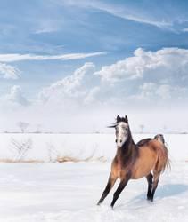 Verspieltes Pferdchen im Winter Schnee
