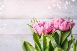 Rosa Tulpen auf hellem Hintergrund