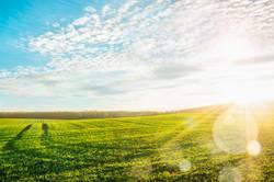 Morgen Landschaft mit grünen Feld in Sonnenstrahlen