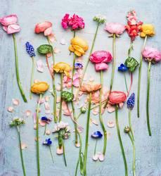 Bunte schöne Garten Blumen Auswahl
