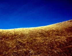 Dürre in Blau