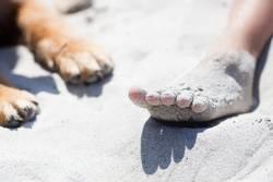 Fuß und Pfote