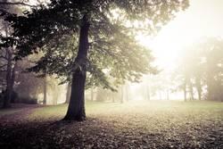 nebliger Morgen im Park