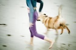 Strandlauf mit Hund