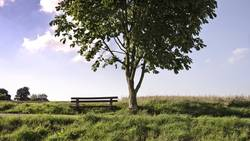Holzbank am Baum