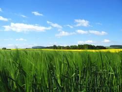 Felder im Mai