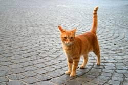 . .__/ Katze