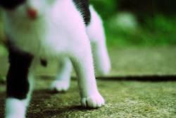 das ist eine katze.