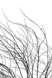 Black and white winter branches curved abstract
