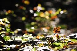 Warmer Herbst