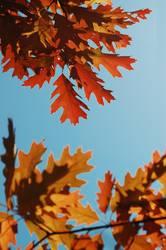 Warmer Herbst II
